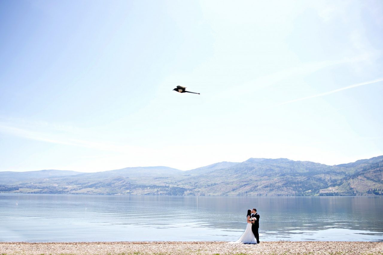 Bride and groom kiss while magpie flies above in kelowna the cove lakeside resort | Nanaimo wedding photographer